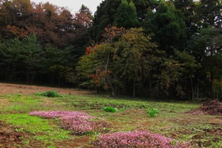 jpg-zoo018-2.jpg